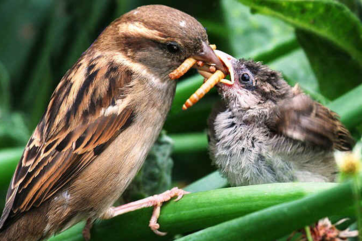 Image result for birds feeding young uk